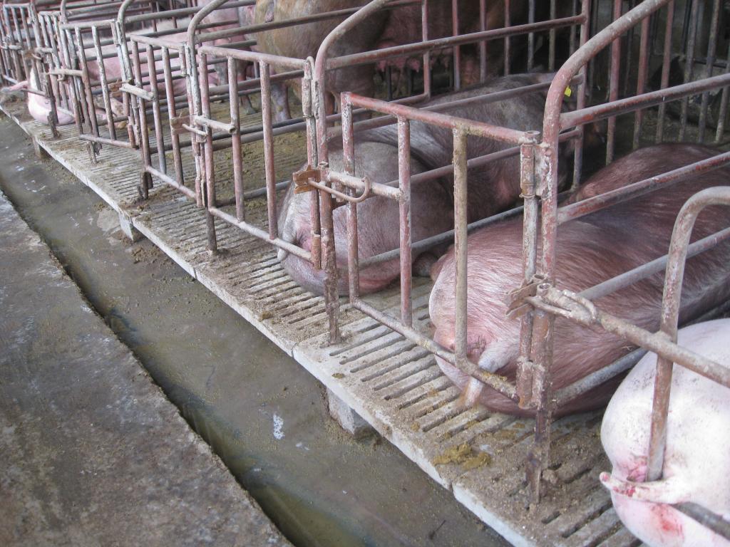 猪栏钢架结构设计图